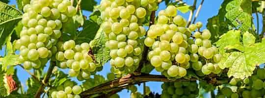 Hvilke stoffer inneholder vin?